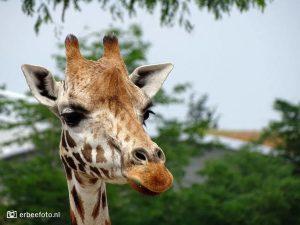 Wildlands-Adventure-Zoo-Dierentuin-Emmen_bijbelstudie_info